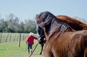 130212-Horses-ASC_2372LSs