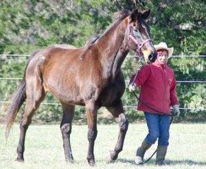 130212-Horses-ASC_2385Ss