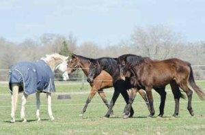 130212-Horses-ASC_2438LSs