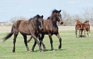 130212-Horses-ASC_2448LS