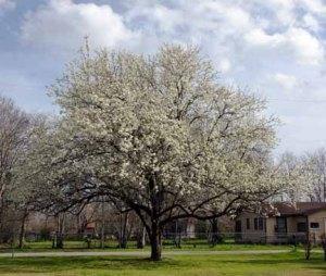 130220-trees-ASC_2577LSs