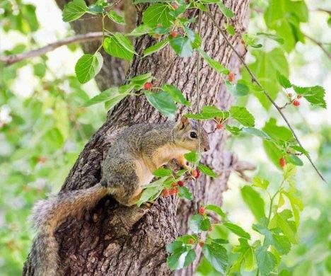 130501-Squirrel-ASC_3112Ss