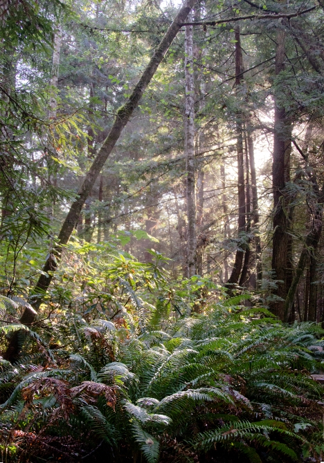 131121-Redwoods-ASC_7274RL