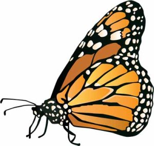normal_ian-symbol-danaus-plexippus copy