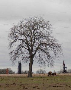 120110-tree-_DSC2280L2Ss