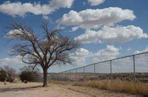 140227-tree-ASC_8143RSs copy