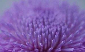 140712-plants-asc_9911Sss