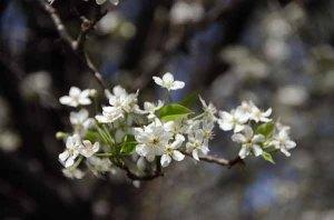 140221-flower-ASC_8082RLSss