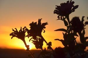 141028-sunset-ASC_2590s