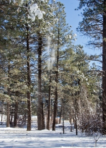 141215-Snow-ASC_3244RLSs