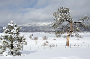 141227-snow-ASC_3667RLSs