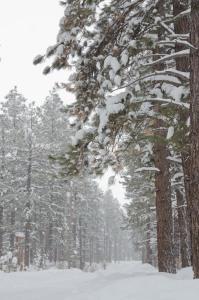 150227-snowstorm-ASC_4900*s