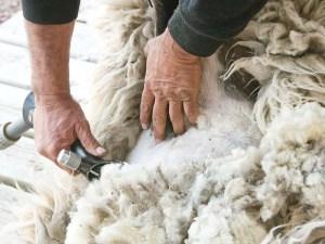 1504026-Wools-ASC_6521RLSs copy
