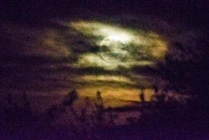 151028-Halloween-asc_9746RSs