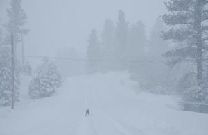 160131-snow-160201-Bisy-ASC_1647