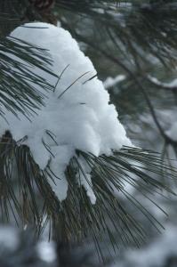 160203-snow-ASC_1952RLSs